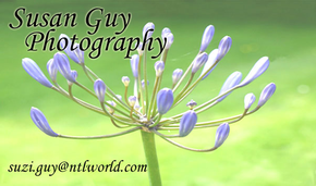 Susan Guy Photography