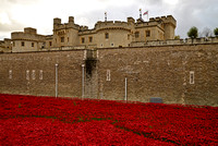 Tower Poppies - London